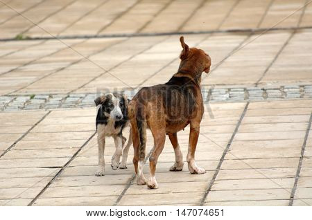 icture of a sad stray dogs on the street