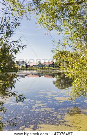 Autumn landscape. Village on the banks of overgrown with slime pond. Russian countryside.