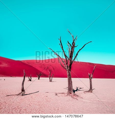 Red desert and cyan sky (Dead Camelthorn Trees in Dead Vlei Namib-Naukluft National Park Namibia)