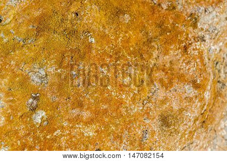 full frame abstract rocky stone surface overgrown with orange lichen