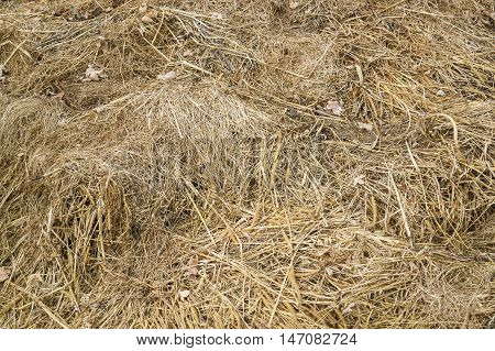 a full frame abstract grassy compost background