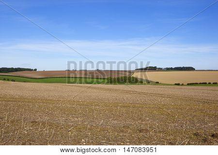 Harvested Canola Field