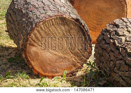 heap of sawn pine wood logs with rough pine bark closeup view.