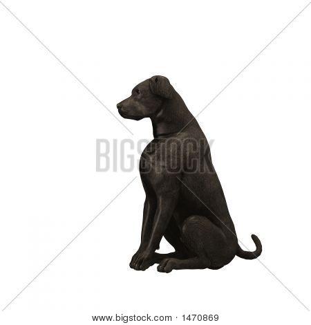 Black Labrador Retriever - 01
