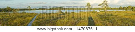 Panorama of bog. Kakerdaja swamp in Estonia Europe. Trees and lake natural environment.