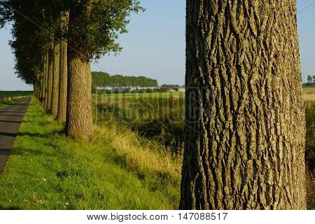 Many trees on the edge of a street