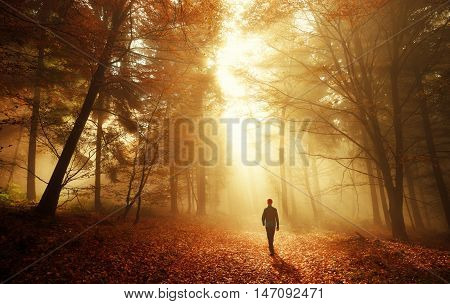Male hiker walking into the bright gold rays of light in the autumn forest landscape shot with amazing dramatic lighting mood