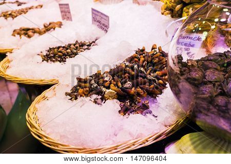 Countertop with various fresh seafood in Boqueria market. Barcelona. Barnacle, shells beautifully laid out on ice in wicker baskets on the counter.