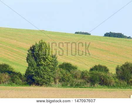 Fields and deciduous trees during sunny day