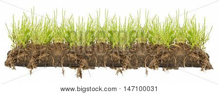 Grass Borders, line isolated on white background