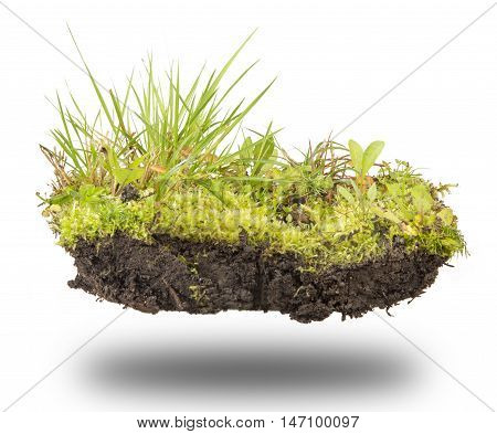 island of forest soil moss grass and mushrooms isolated on white background