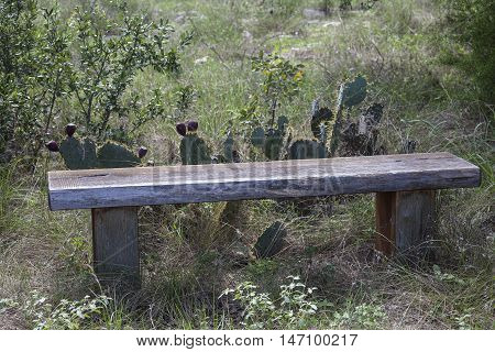 Wooden bench surrounded by prickly pear cactus off hiking trail.