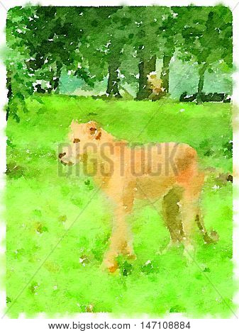 Digital watercolour painting of a lioness walking on the grass.
