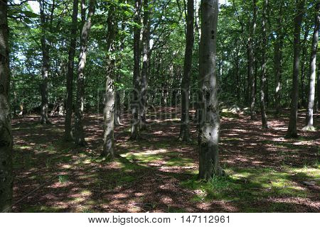 View inside of the forest on the trees. North scandinavian pine forest, Sweden natural travel outdoors.