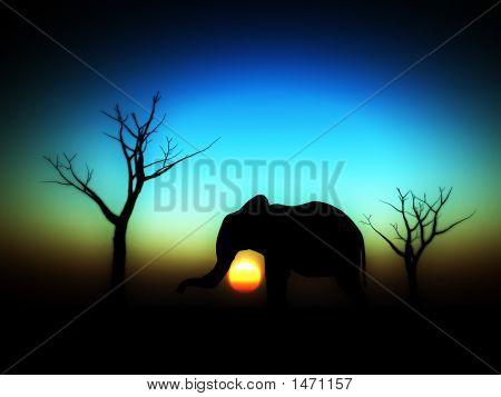 Elephant Sunrise