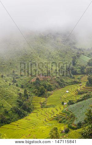 Rice fields on terrace in rainy season at Mu Cang Chai Yen Bai Vietnam. Rice fields prepare for transplant at Northwest Vietnam