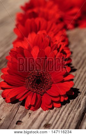 Red gerbera daisies clustered on a rustic wood picnic table background