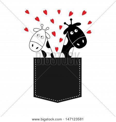 Cute cartoon black white giraffe in the pocket boy and girl with little hearts. Camelopard couple on date. Long neck. Funny character set. Happy family. Love greeting card Flat design Isolated. Vector