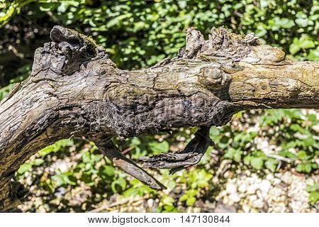 fallen tree trunk and branches details outdoor closeup