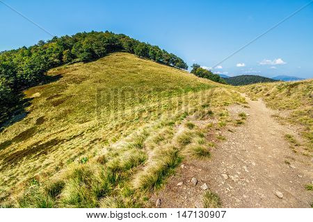 Path Through Mountain Landscape