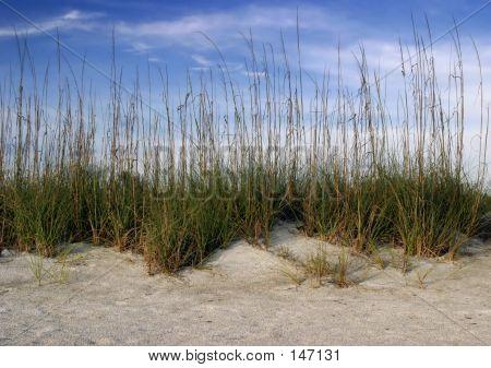 Dune Grass And Sky