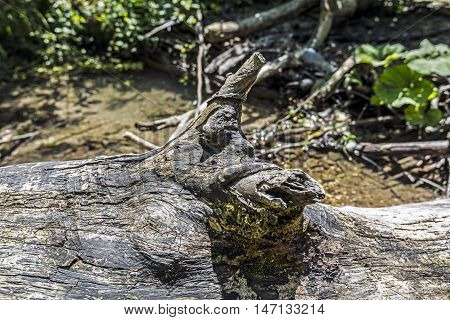 fallen tree trunk and branches details riverside closeup