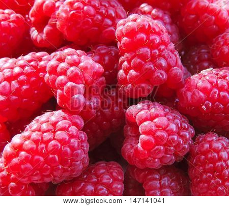 Pink raspberries, full frame shot of fresh juicy raspberry fruits.