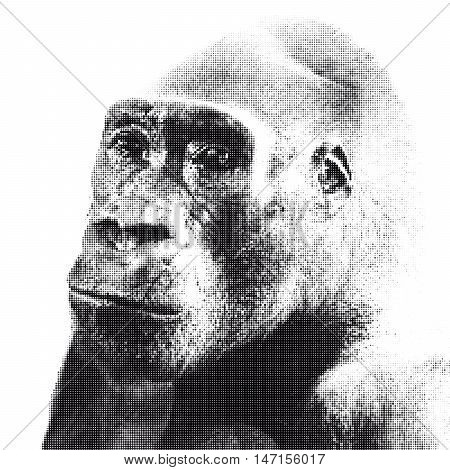 Halfrone portrait of gorilla with sad look