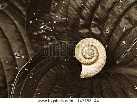 art black and white photo of snail shell on leaf close up