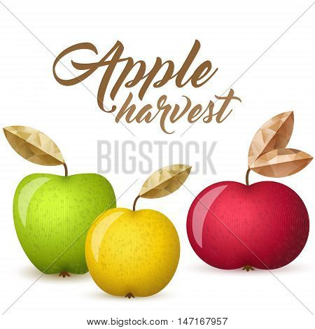 Three ripe apples - green yellow and red - vector illustration. Colorful autumn apples with leaves.