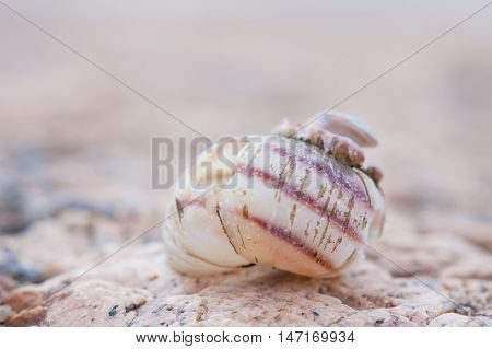 spiral snail shell closeup. abstract detailed photo
