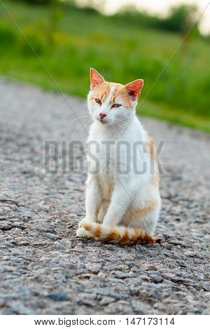 Homeless Red Cat Sitting On The Warm Asphalt Road. A Stray Cat Looking At The Camera And Squinting