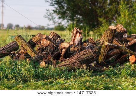 Stack Of Firewood In Garden On The Grass
