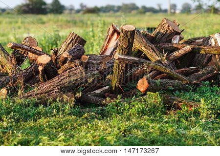 Stack Of Firewood In Field On The Grass