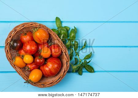 Fresh tomatoes and basil on the blue wooden background.