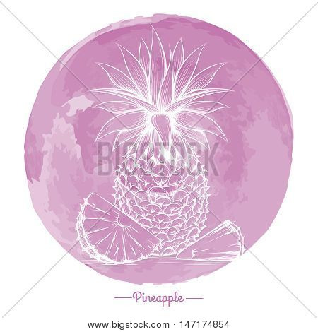 Hand drawn pineapple on watercolor pink cirlce backdrop vector
