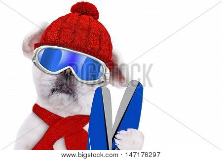 Dog wearing ski goggles relaxing in the mountain. Isolate on the white background.