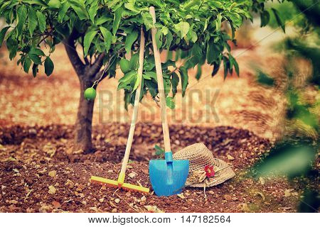 Work in the garden, necessary tools for work in the soil, rake, shovel and hat under lemon tree, fruits cultivation, production of a  healthy organic nutrition