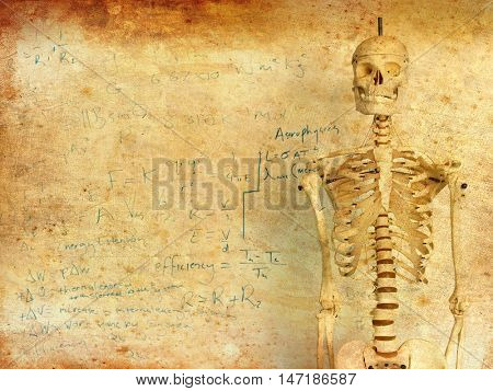 Skeleton in front of whiteboard with mathematics calculation
