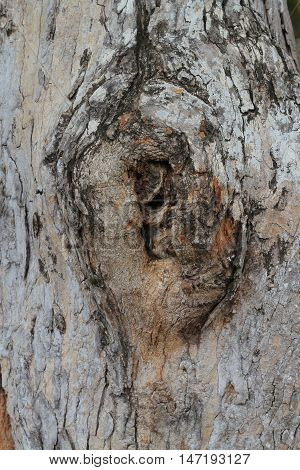 close up gnarl of tree abstract background