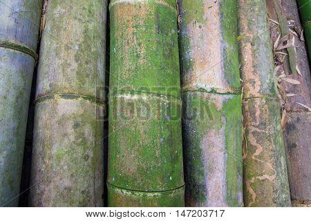 Stack Of Big Bamboo