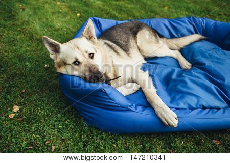 relaxing dog on his bed, green grass background