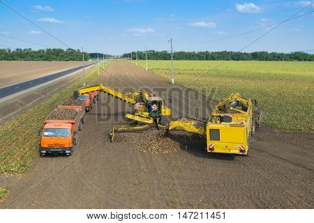 KRASNODAR REGION, RUSSIA - AUG 19, 2015: Machine loads of sugar beet into truck and harvester pours harvest, In 2015 in Krasnodar region have collected record grain harvest - 102 million tons of grain