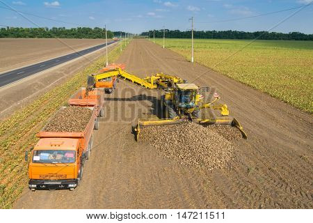 KRASNODAR REGION, RUSSIA - AUG 19, 2015: Machine loads of sugar beet into orange truck, In 2015 in Krasnodar region have collected record grain harvest - 102 million tons of grain