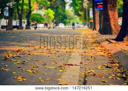 Yellow leaves season in Hanoi ancient town