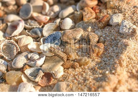 Close up of wet sand with crushed sea shells in sunny day. Selective focus