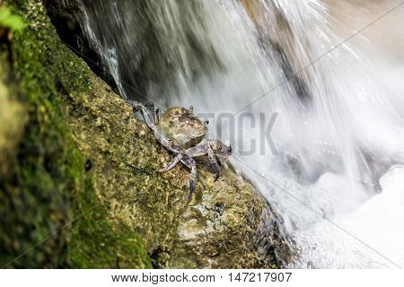 Crab on the rock.  Nature,background -  Greece.