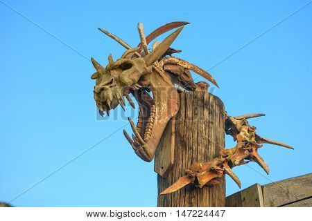 Dinosaur skull. Pterodactyl. The Dragon. Photo archaeological excavations.