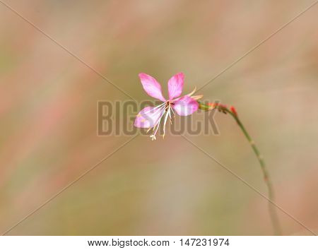 Single tiny pink flower on the plant