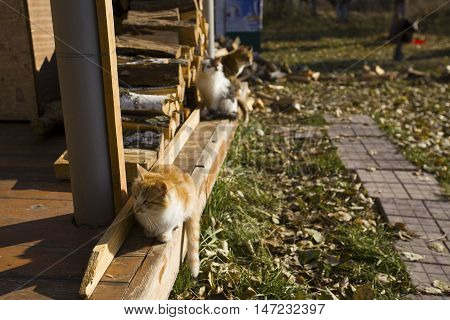 Three kittens sitting on the wooden porch in autumn